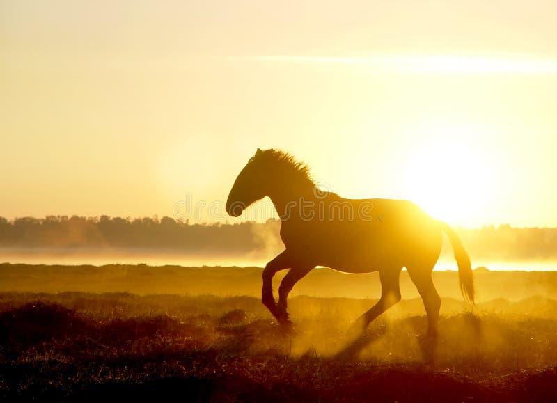 Hästen hoppar over på solnedgången i dimman royaltyfri foto