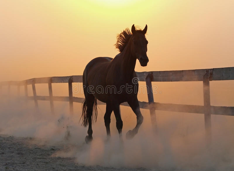 Hästen kör mot damm royaltyfria bilder