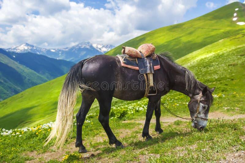 Hästen med sadeln betar i berg på ljus solig sommardag hästen äter grönt gräs på kullen arkivfoto