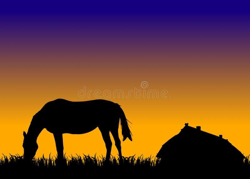 hästen nära betar fast solnedgång vektor illustrationer