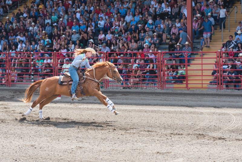Hästen och ryttaregalopp till mållinjen av trumman springer på Williams Lake Stampede arkivfoton