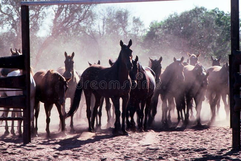 Hästen samlar royaltyfri foto
