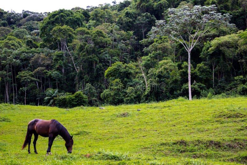 Hästen som äter gräs på en gräsplan, betar royaltyfri fotografi