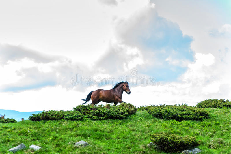 Hästen som kör i bakgrunden av himlen och fördunklar arkivfoton