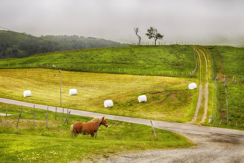Hästen står på ett grönt mejat gräsfält på en dimmig dag för sommar arkivfoton