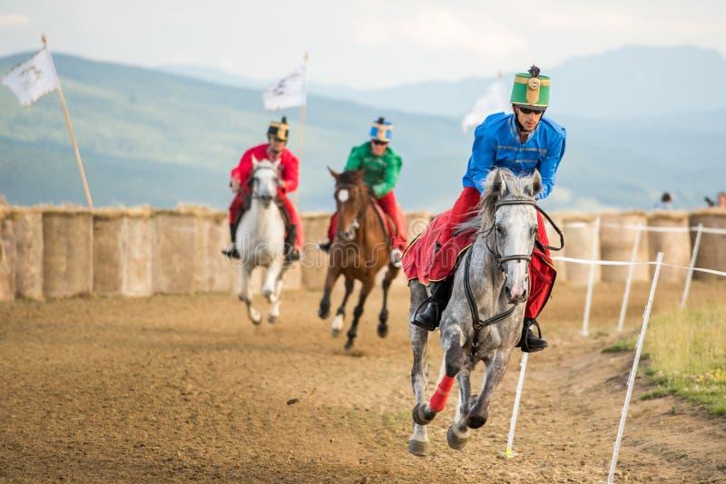 Hästen ståtar, under en hästshow med unga ryttare royaltyfria foton