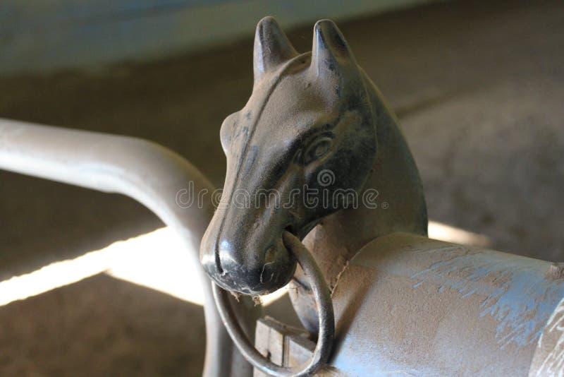 Hästen utfärda utegångsförbud för royaltyfri bild