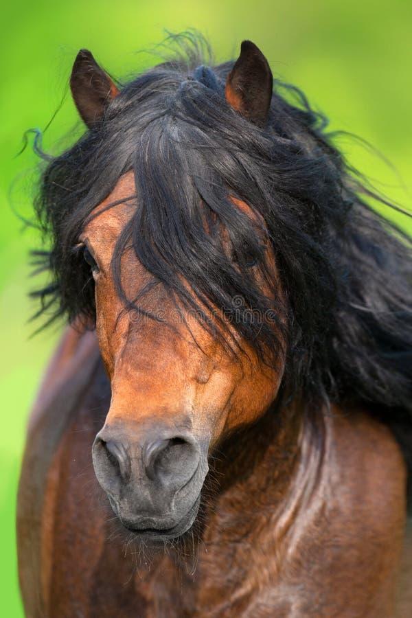 Hästen vinkar in arkivfoto