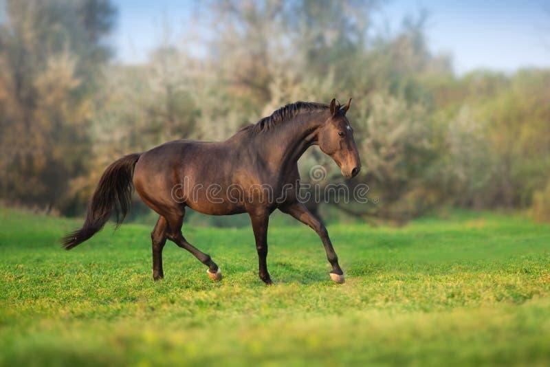 Hästen vinkar in royaltyfria foton