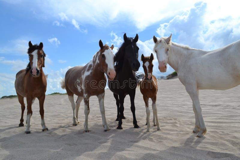 Hästfamilj royaltyfri bild