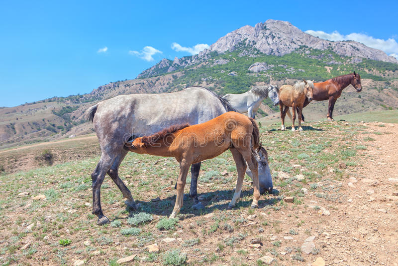 Hästfamilj i bergen royaltyfri bild