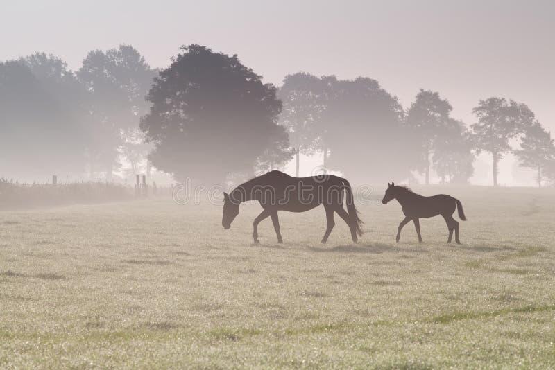 Hästfamiljen går på dimmigt betar royaltyfri bild