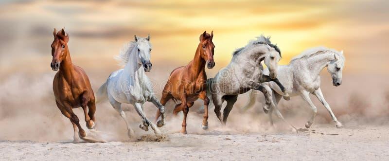 Hästflockkörning royaltyfri fotografi