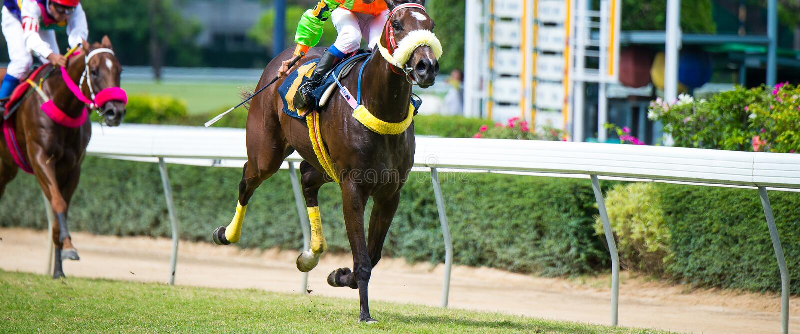 Hästhastighet i hästkapplöpning på löparbanan royaltyfria foton