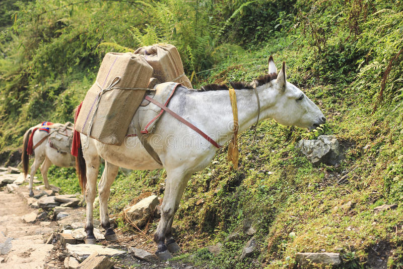 Hästhusvagn i Nepal fotografering för bildbyråer