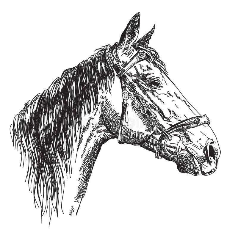 Hästhuvud i profil med illustratio för teckning för tygelvektorhand royaltyfri illustrationer
