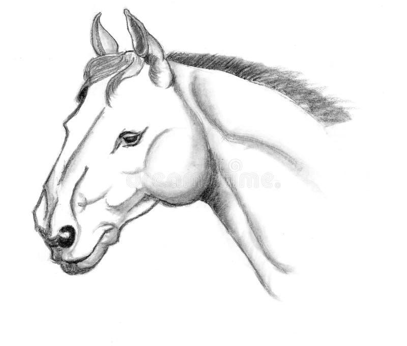 Hästhuvudet skissar stock illustrationer