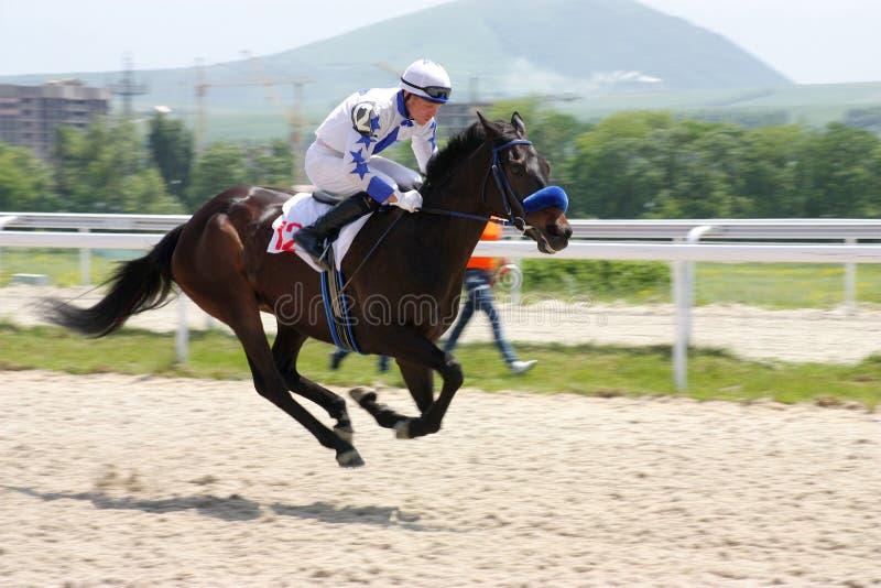 hästjockeysommar royaltyfri fotografi