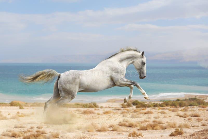 Hästkörning arkivfoton