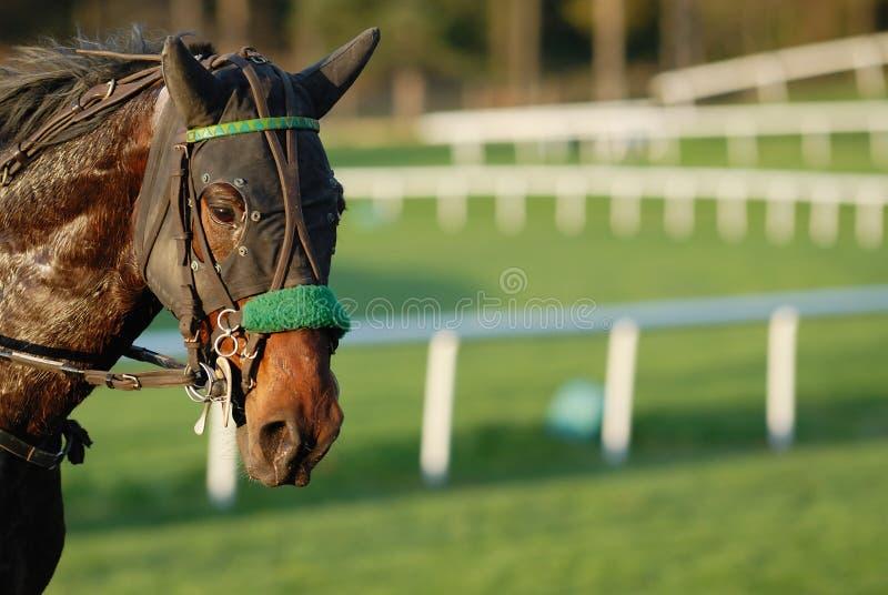 Download Hästkapplöpning arkivfoto. Bild av trångsynt, nostrils - 19787802