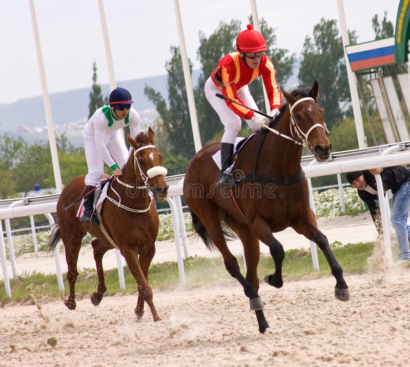 hästkapplöpning royaltyfria bilder