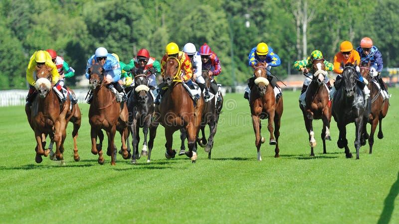Hästkapplöpning i Milan, Italien arkivbild