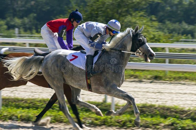 Hästkapplöpning i Pyatigorsk royaltyfria foton