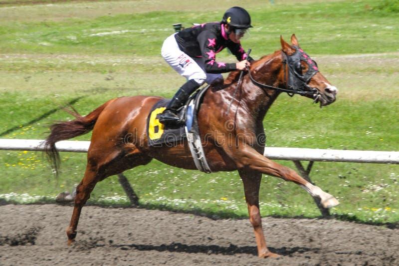 Hästkapplöpning PNE Vancouver med jockeyn royaltyfri fotografi