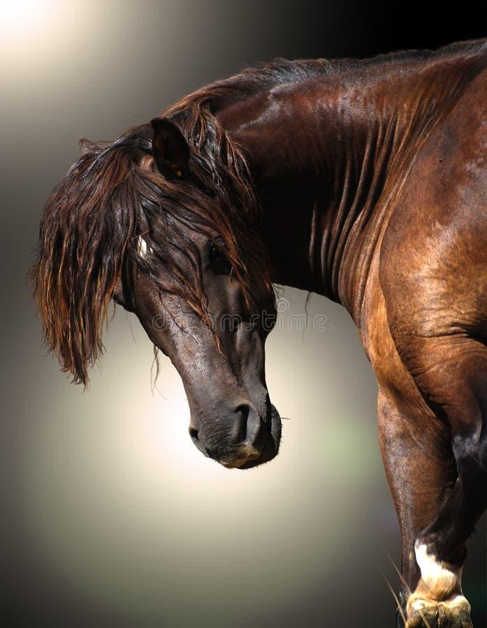 Hästkraft fotografering för bildbyråer