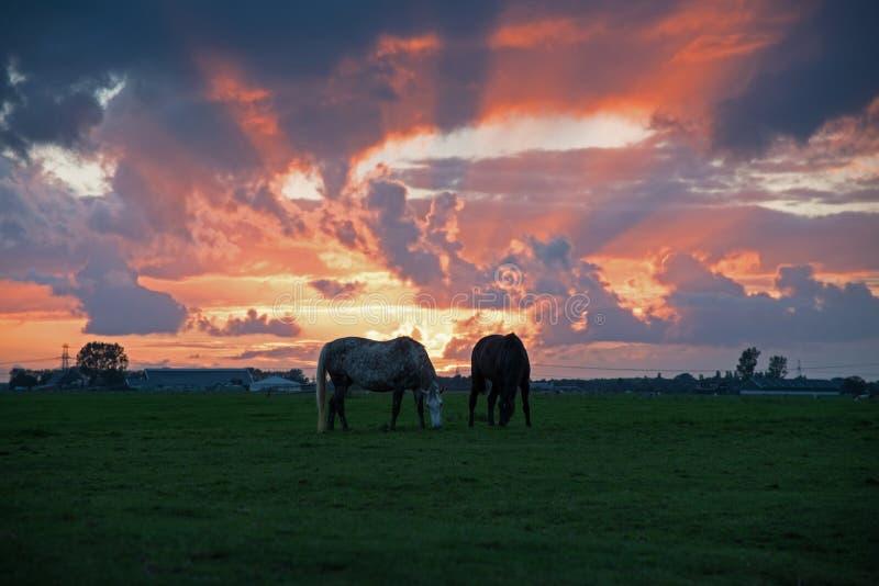 Hästlantgård i solnedgången royaltyfria foton