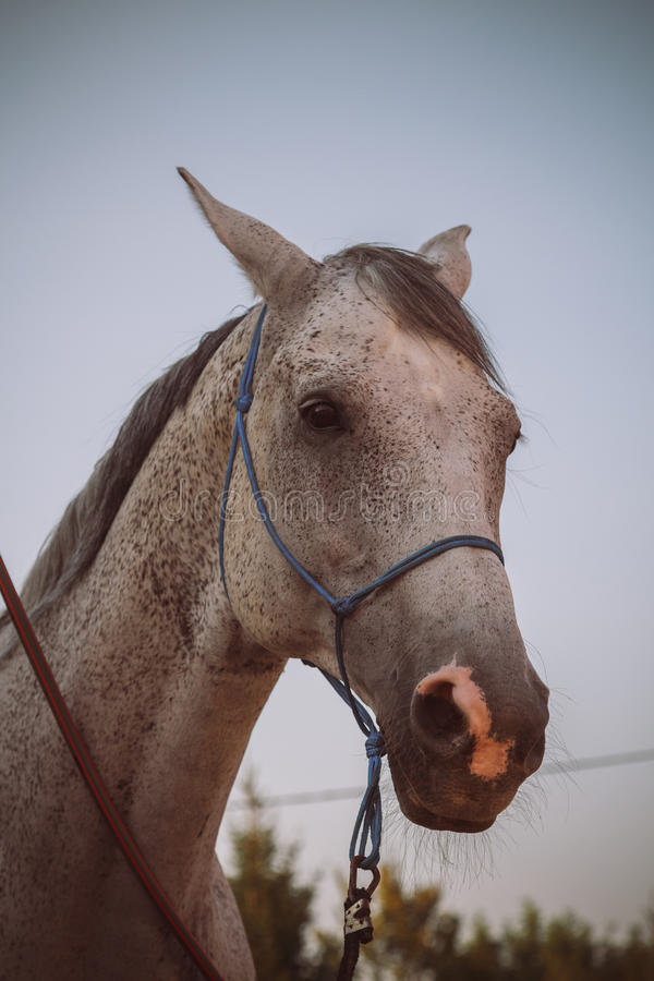 Hästlantgård, trevliga rena häststall royaltyfri fotografi