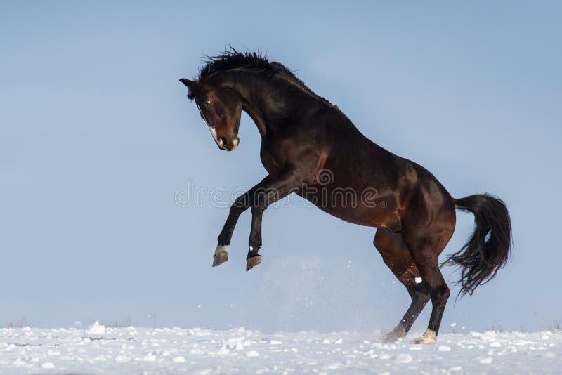 Hästlek royaltyfri fotografi