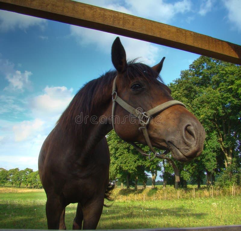 hästlooks royaltyfri fotografi