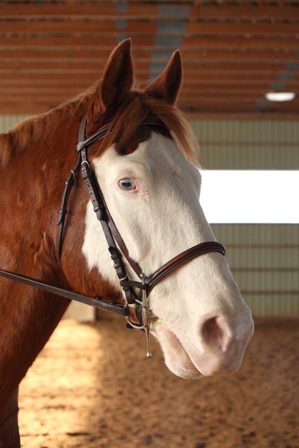 hästmålarfärg arkivfoton