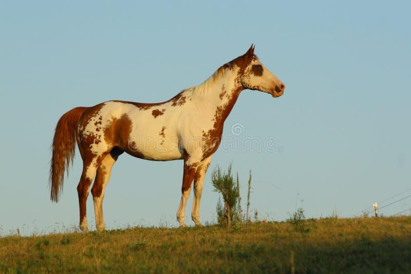 hästmålarfärgsideview arkivbilder