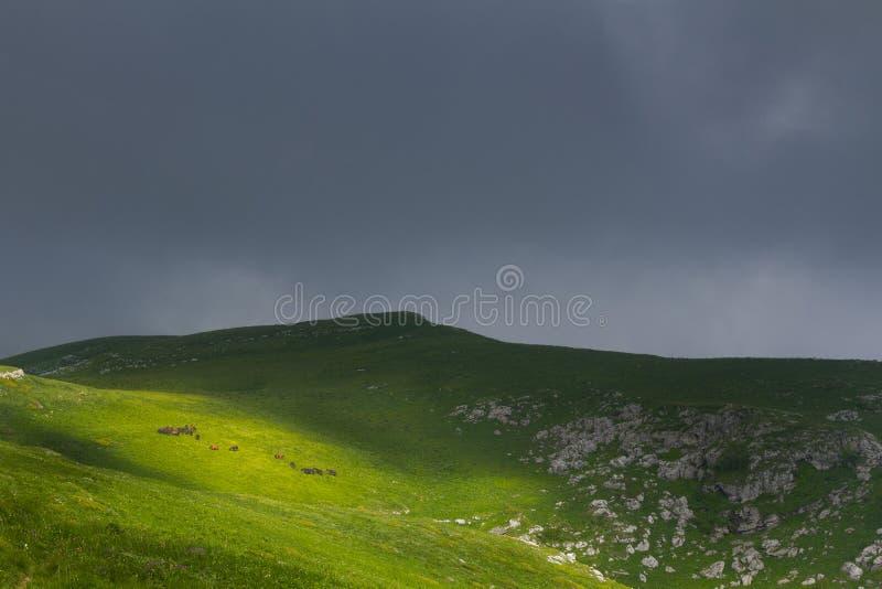 Hästmatning på kullen royaltyfri bild