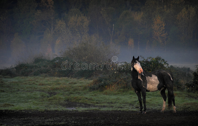 hästmist royaltyfri foto
