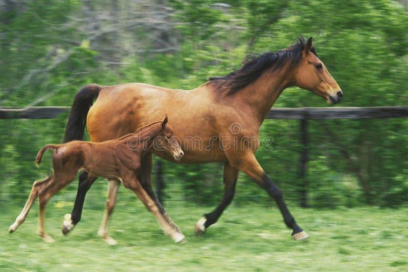 hästmoder royaltyfri bild