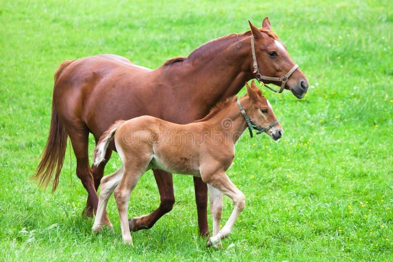 Hästmoder och barn arkivbilder