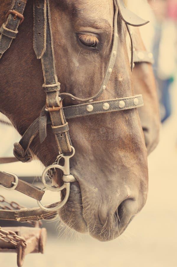Hästnäsan eller tystar ned royaltyfri foto