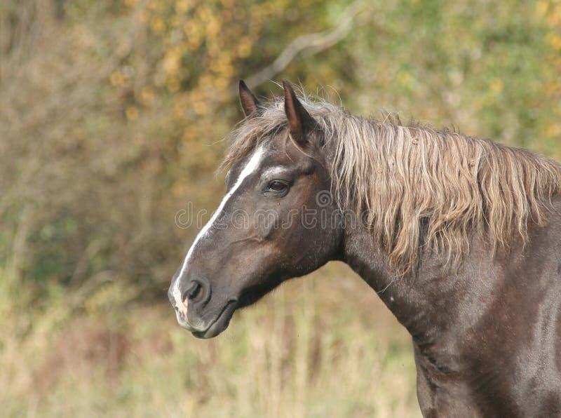 hästnatur arkivfoton