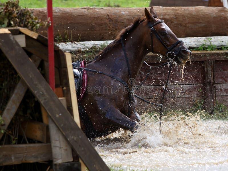 Hästnedgångar i vattenhindret Tre-dag-händelse royaltyfri bild