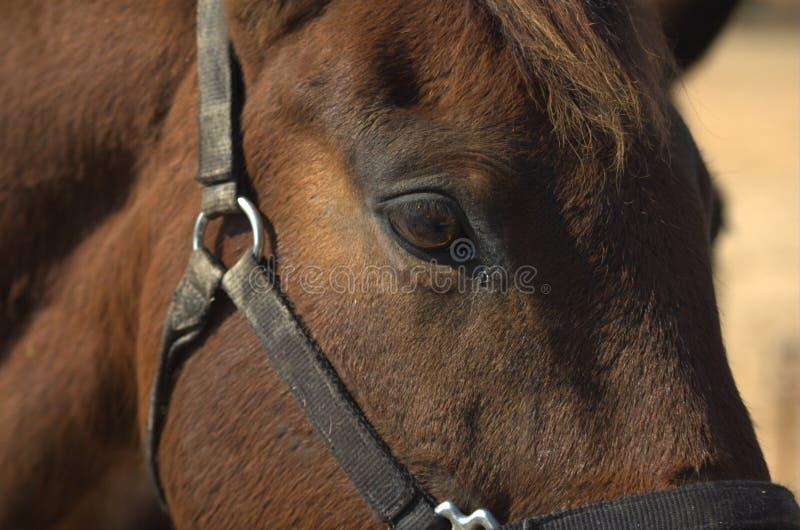 hästprofil royaltyfria foton