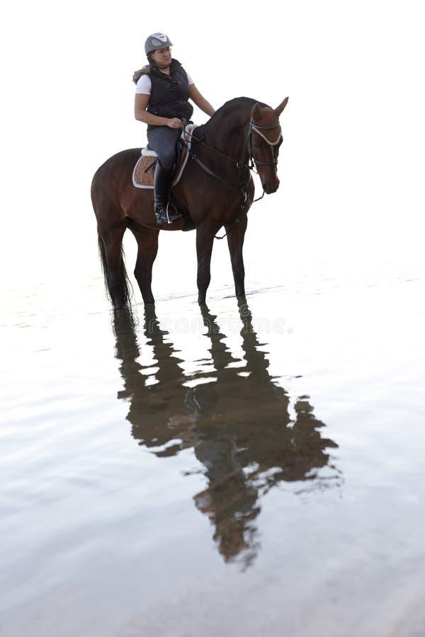 Hästridning i vattnet arkivfoton