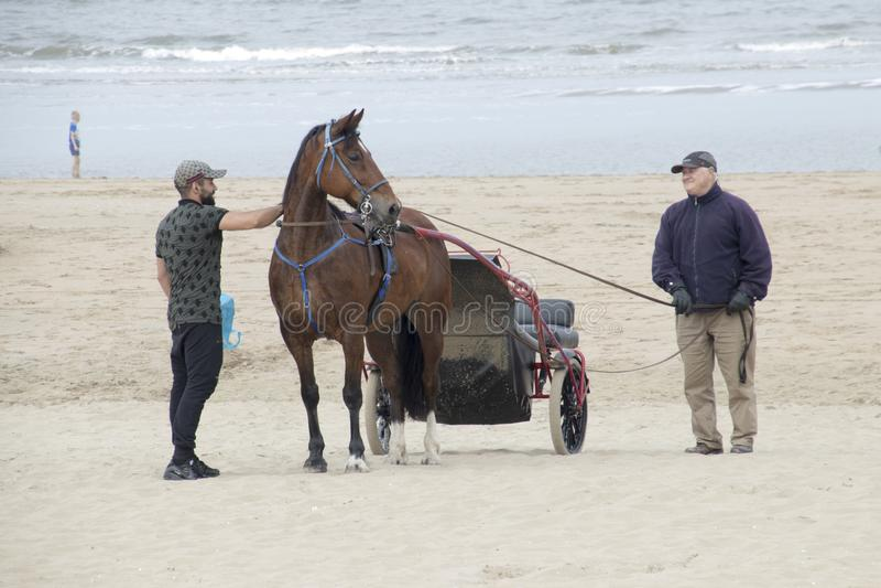 Hästridning längs stranden royaltyfri fotografi