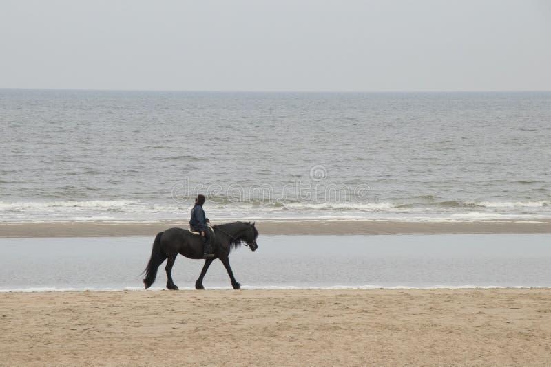 Hästridning längs stranden royaltyfri bild