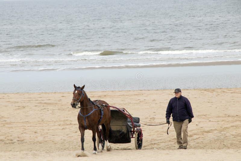 Hästridning längs stranden arkivfoto