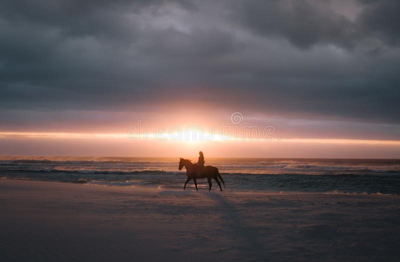Hästridning på solnedgången på stranden royaltyfri bild