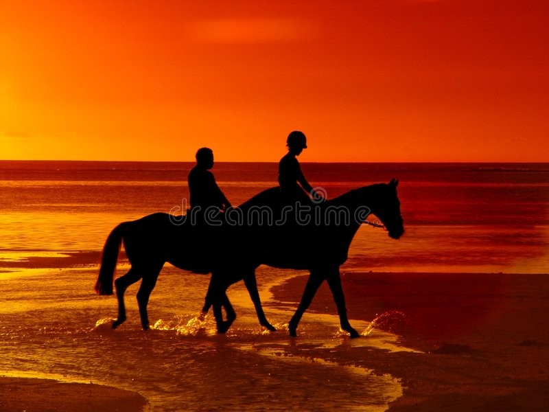 hästridningsolnedgång royaltyfria foton