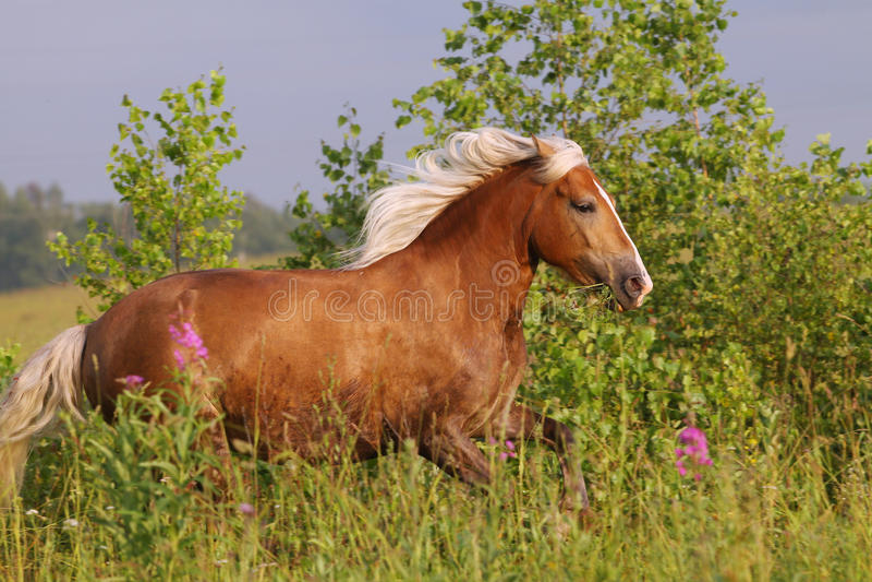 hästrunning fotografering för bildbyråer